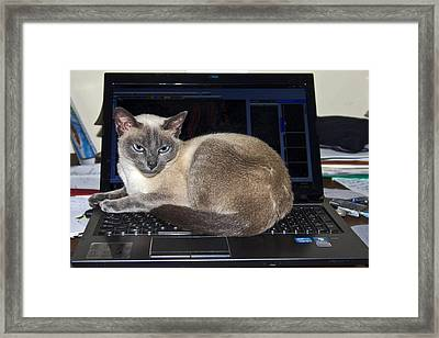 Computer Cat Framed Print by Sally Weigand