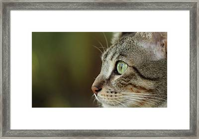 Concentration Framed Print by Copyright Faraaz Abdool/Hector de Corazón