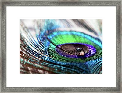 Concentric Circles Framed Print