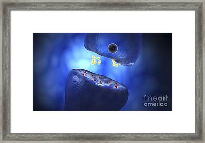 Conceptual Image Of Synaptic Framed Print by Stocktrek Images