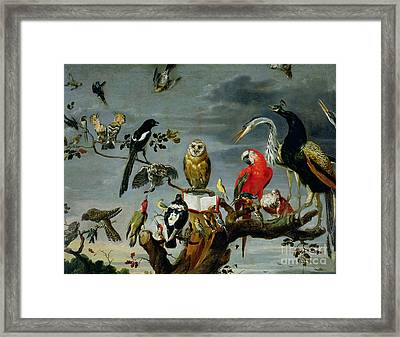 Concert Of Birds Framed Print by Frans Snijders