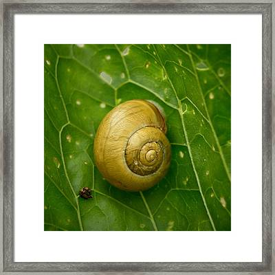 Framed Print featuring the photograph Conch by Jouko Lehto