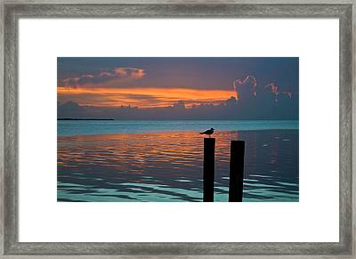 Conch Key Sunset Bird On Piling Framed Print