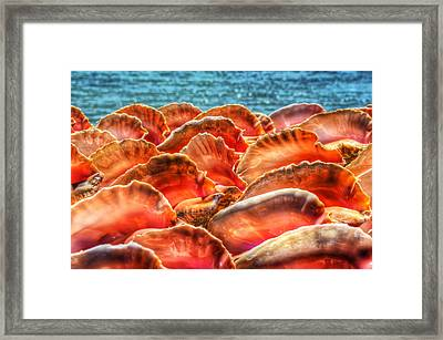 Conch Parade Framed Print