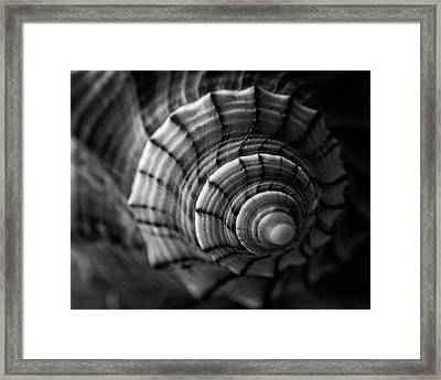 Conch Shell In Black And White Framed Print