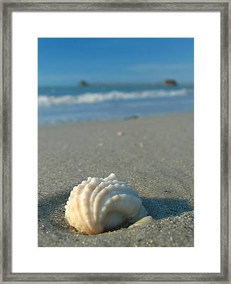 Conch Shell Framed Print by Juergen Roth