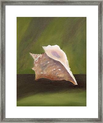 Conch Shell Framed Print by Shirley Lawing