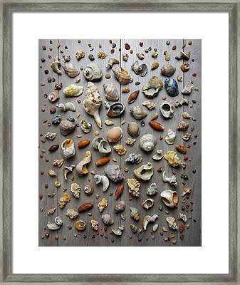Conches And Shells Framed Print by Carlos Caetano