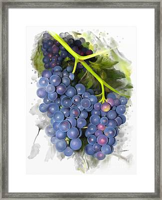 Concord Grape Framed Print