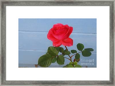 Concrete Rose Framed Print