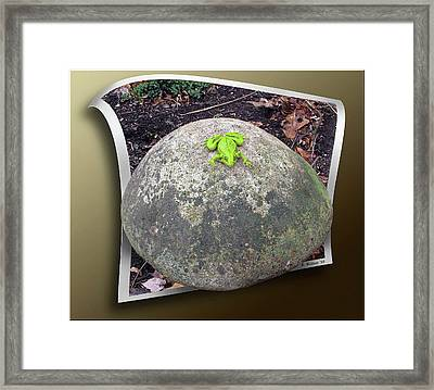 Concrete Toad Stool Framed Print by Brian Wallace
