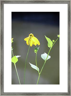Cone 5599 Framed Print by Carolyn Stagger Cokley