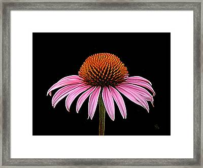 Cone Flower - Rudbeckia Framed Print