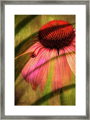 Cone Flower And The Ladybug Framed Print