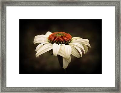 Cone Flower Framed Print
