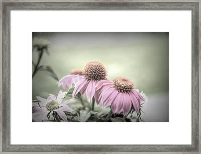 Cone Flowers Dream Framed Print