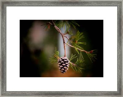 Cone Of Silence Framed Print by Karen Scovill
