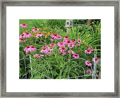 Cone Plants Framed Print