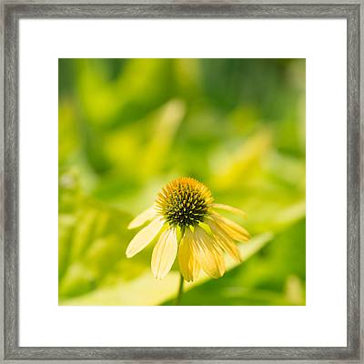 Cone Squared Framed Print