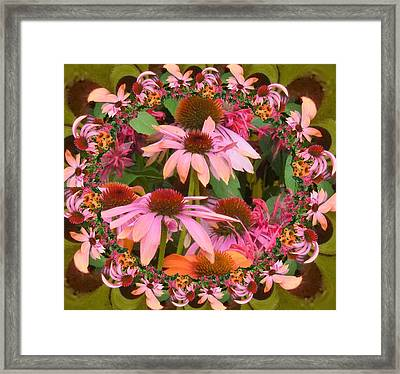 Coneflower 2 Framed Print by Nancy Pauling