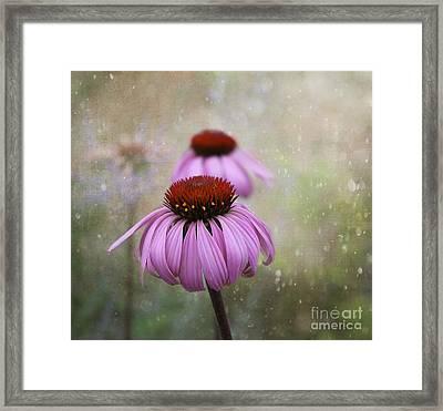 Coneflower Dream Framed Print