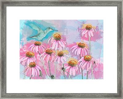Coneflower Hummingbird Watercolor Framed Print