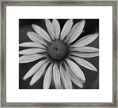 Coneflower In Black And White Framed Print