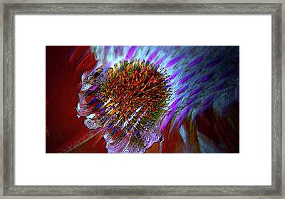 Framed Print featuring the photograph Coneflower by Irma BACKELANT GALLERIES