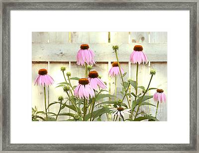 Coneflower Patch Framed Print