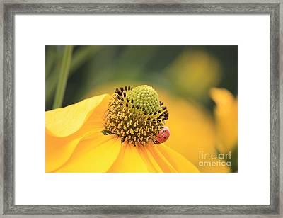Coneflower With Ladybug Framed Print