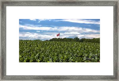 Confederate Flag In Tobacco Field Framed Print