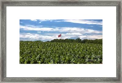 Confederate Flag In Tobacco Field Framed Print