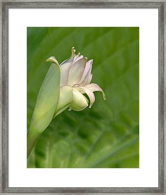 Confidant Smile Framed Print by Bill Kellett