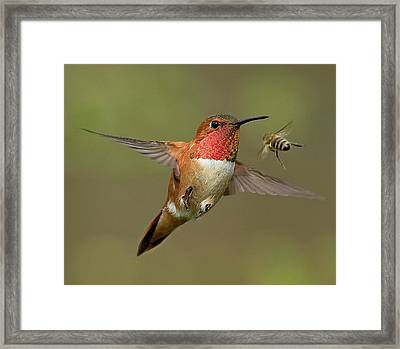 Confrontation Framed Print by Sheldon Bilsker