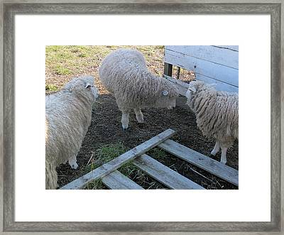 Confusion Framed Print by Scott Kingery