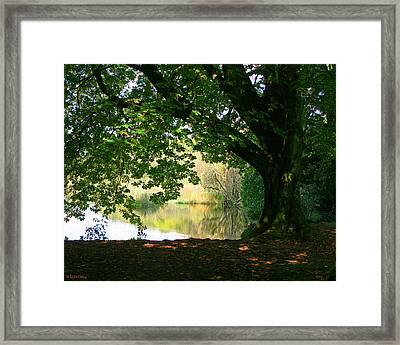 Cong Park Framed Print
