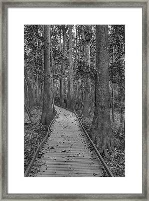 Framed Print featuring the photograph Congaree 2017 03 Bw by Jim Dollar