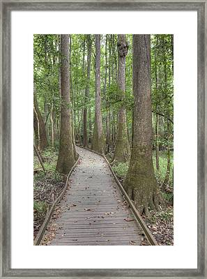 Framed Print featuring the photograph Congaree 2017 03 by Jim Dollar