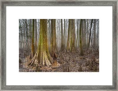 Congaree National Park Framed Print by Derek Thornton
