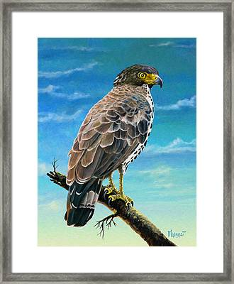 Congo Serpent Eagle Framed Print by Anthony Mwangi