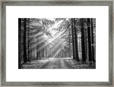 Conifer Forest In Fog Framed Print