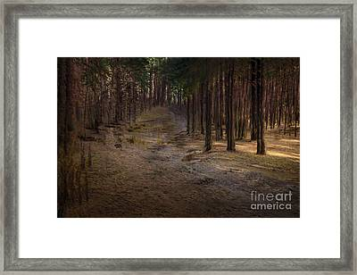 Conifer Hill Framed Print by Richard Thomas