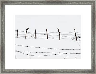 Connected -  Framed Print