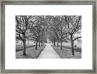 Connecticut College Landscape Framed Print by University Icons