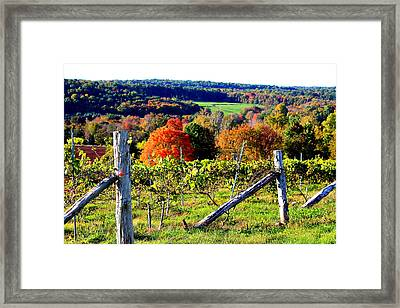 Connecticut Winery Framed Print
