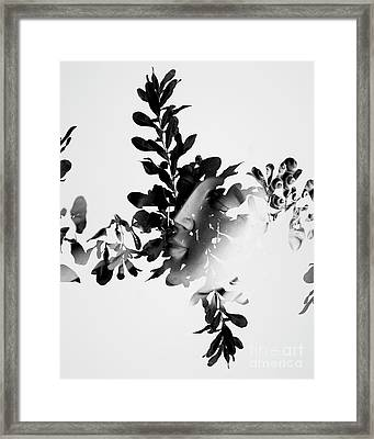 Connection To All That Is Framed Print