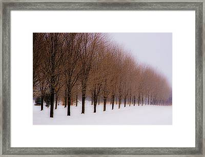 Connolly Trees Framed Print