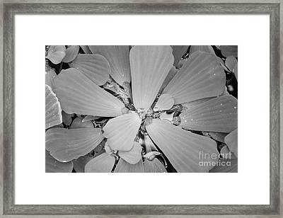 Conservatory Nature In Black And White 1 Framed Print by Carol Groenen