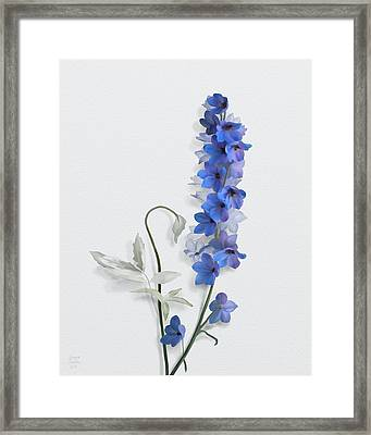 Framed Print featuring the painting Consolida by Ivana Westin