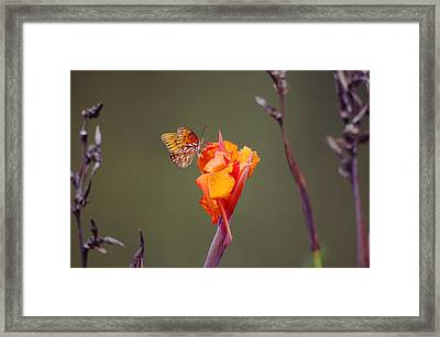 Conspicuous Camouflage Framed Print